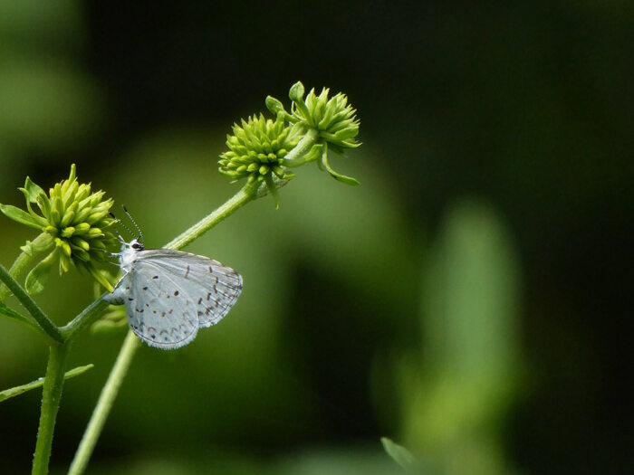 A white butterfly sitting on a green flower